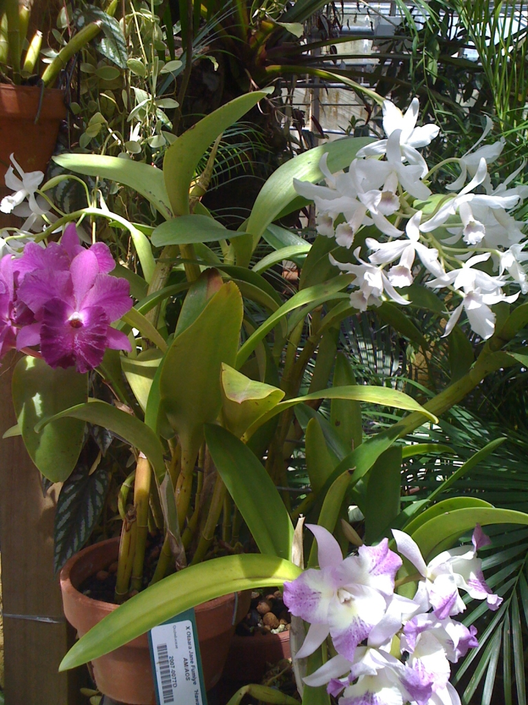 Selby Garden Orchids